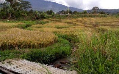 Serial Diskusi Nusantara 85: Konflik Agraria dan Hak Masyarakat Hukum Adat (MHA) di Kawasan Hutan